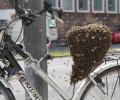 Fietstocht langs imkers in België