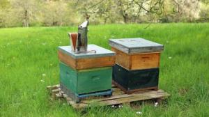 bijenkasten Peter Berx
