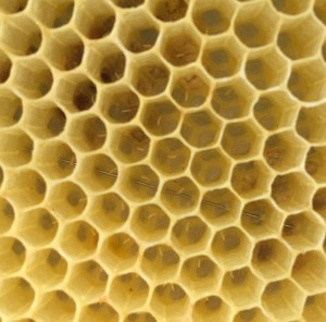 bees-985083_960_720